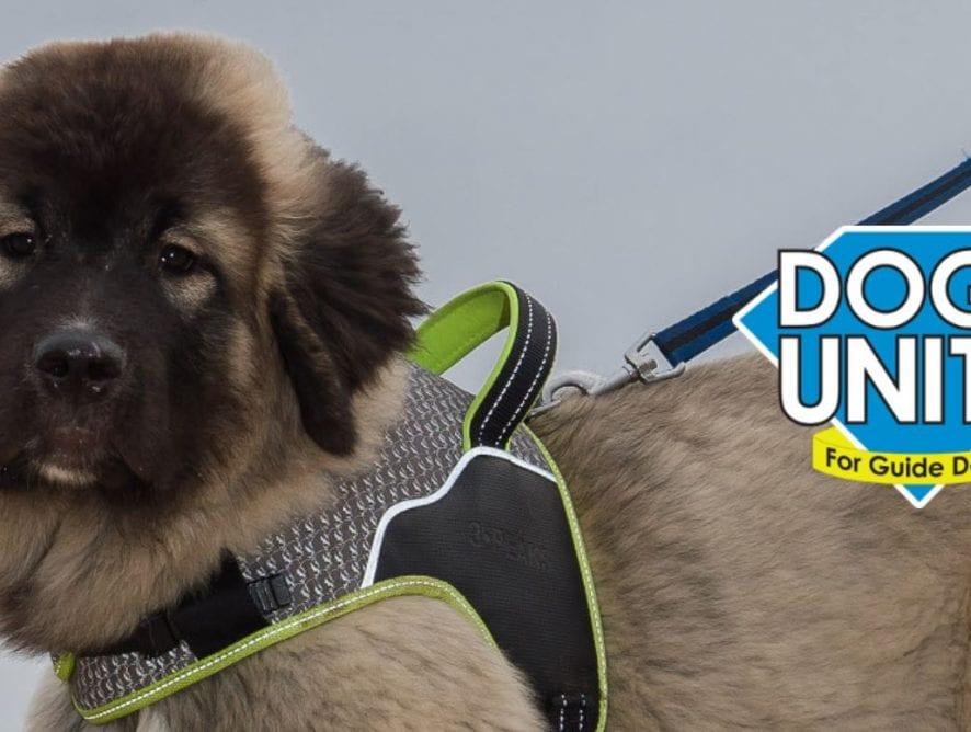 Dogs Unite Sponsored Dog Walk