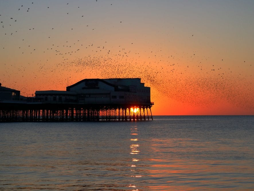 Sunsets and Starling by Donna Eaves
