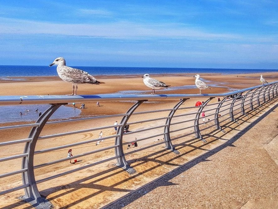 Seagulls on the seashore, by Ged Docherty